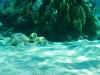 rybki_flores-4
