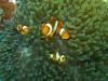rybki_flores-20