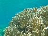 rybki_flores-21