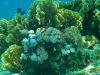 rybki_flores-6